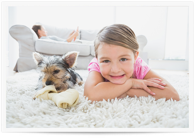Pet Urine Removal Service in Rochester