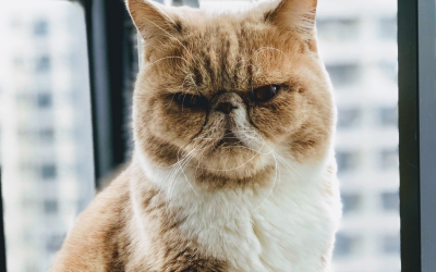Cats are Completely Underrated. Here's Why…